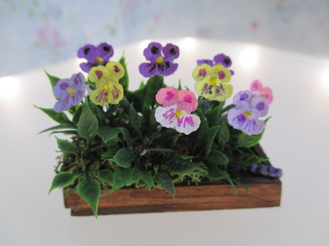 Pansies in Flat